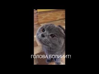 У кота сильно болит голова и он об этом рассказывает