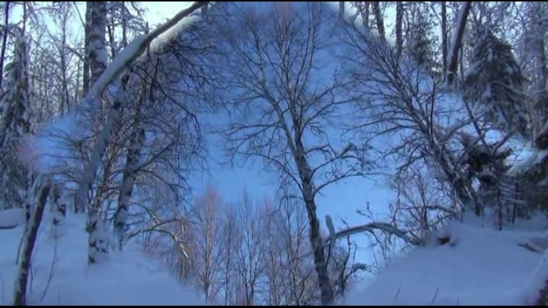 Зимний лес в Котласе