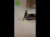 Попугай и его спорткар