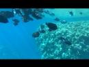 Красное море, батискаф-4