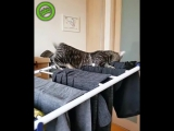 Кошак и сушилка