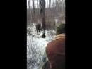 Жёсткая Охота на медведя зимой