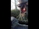 Сказочный лес в Efteling