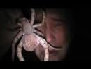 Страшный паук видео прикол про паука — Сегодня мне было очень страшно находиться ночью в темноте.mp4