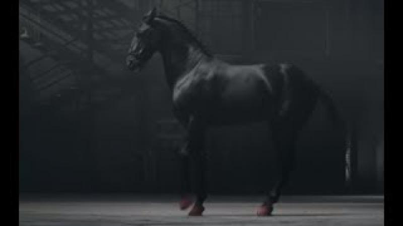Эта лошадь танцует не хуже балерины. Божественное исполнение, от которого мураш ...