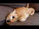 Спорим ЗАСМЕЕШЬСЯ, смешные животные - 5 минут позитива, Постарайся не смеяться