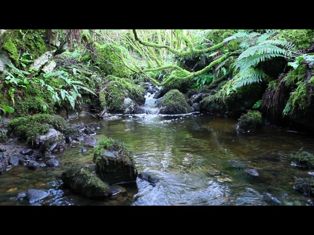 1 Hour Nature Sounds Without Birdsong Sound of Water Relaxation Meditation Scots River Leitrim Relax