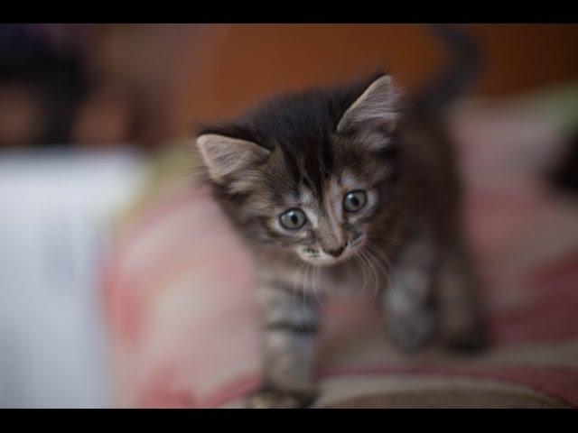 Наши взрослые кошки и их микро копии 24 04 17