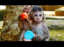 Lori Vs Ameri Two Cute Babies Monkeys Lori and Ameri Playing Well