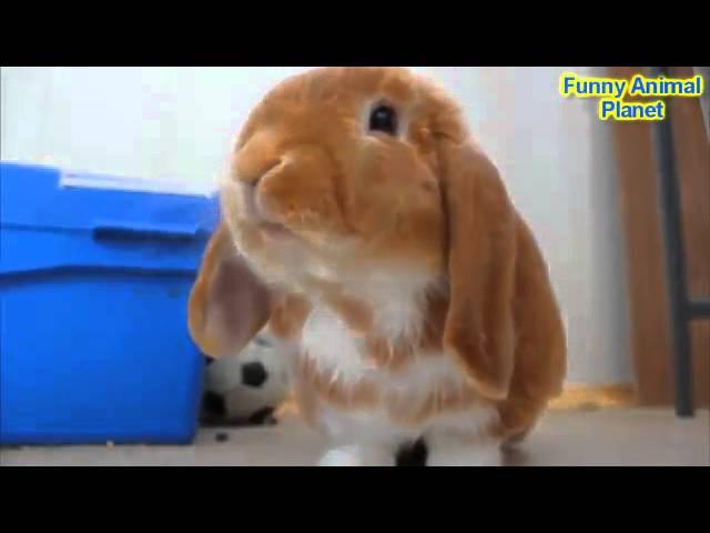 Самые Смешные Кролики