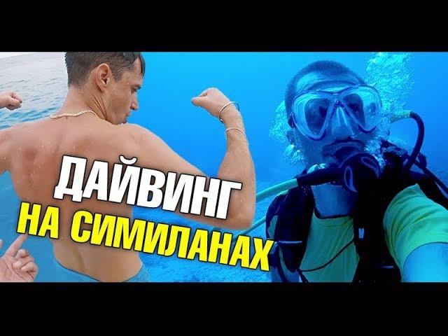 Дайвинг на Симиланских островах с Александром Кондрашовым