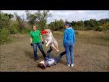 Работа на семинаре по фризби-фристайлу - австралийская овчарка Персик