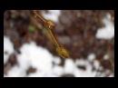 Почти весна в декабре в Вязниках 17 12 17