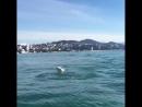Дельфины в акватории Сочи устроили настоящее шоу. 😊   Видео: gammy_bear