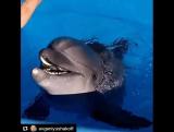 Плавание с дельфинами. Ялта