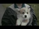 Pedigree_реклама корма для собак мальчик со щенком
