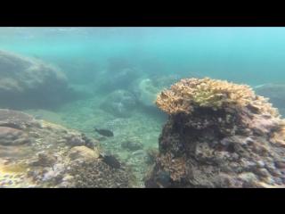 Snorkeling/Vietnam/Sibrenkov
