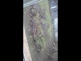 Ужас у меня во дворе бегают стая бездомных собак((((