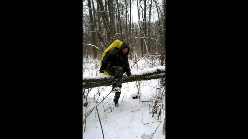Заболоченный лес