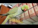 Да я твоего Диккенса читал ожереловый попугай