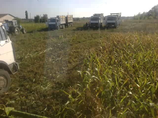 Заготовка кукурузы на силос .сумская область.