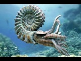 Крымский аммонит возрастом 135 млн.  лет