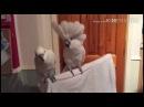 Попугаи танцуют под гитару (Ржач!)