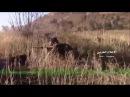 В Сирии замечен Т-90 редкой модификации
