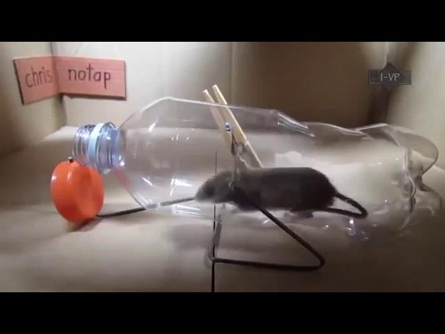 ловушки для мыш и крыс своими руками