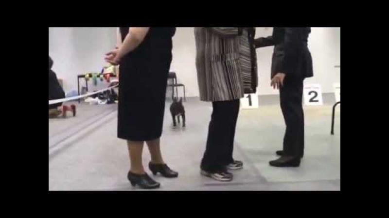 Хеппи Рен Ларго Винч выставка 3
