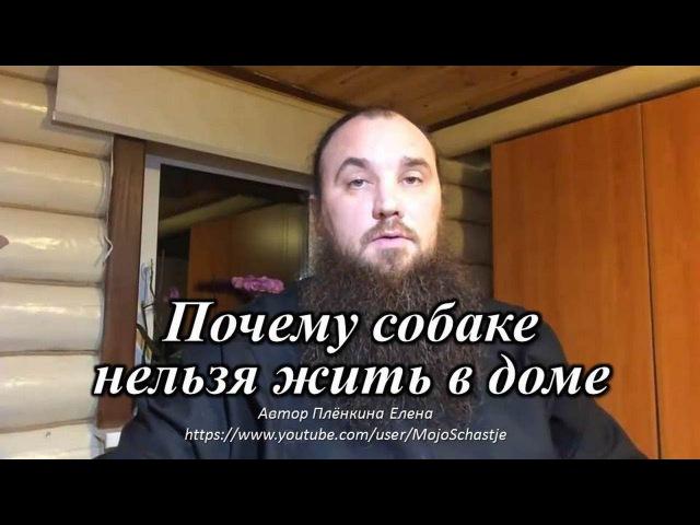 Почему собаке нельзя жить в доме. Священник Максим Каскун. Why can not a dog live in a house