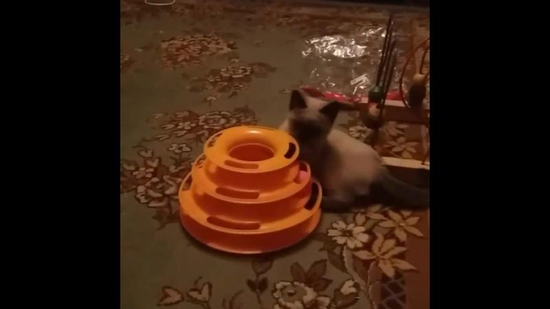 А у нас новая игрушка!