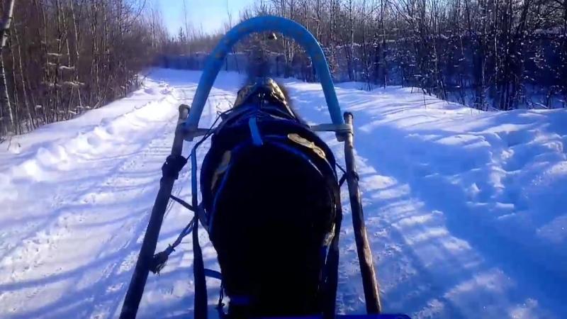 Катание на санях в зимнем лесу :)
