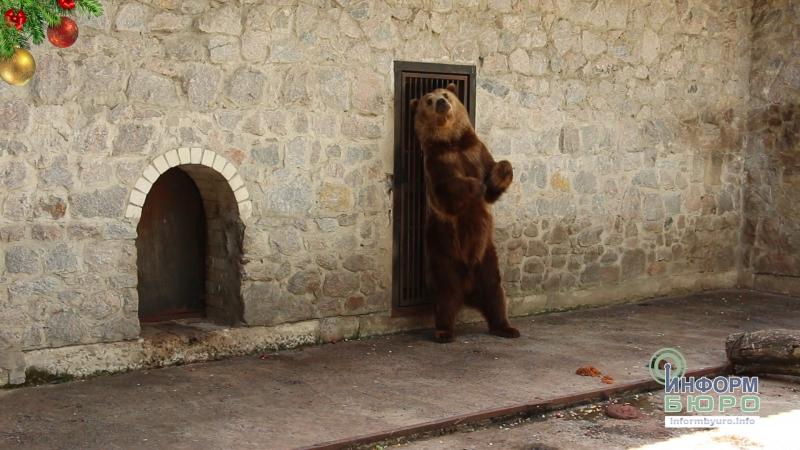 Ведмеді Харківського зоопарку не впали у зимову сплячку
