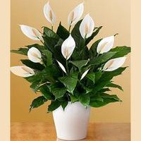 Доставка цветов беларусь пинск, цветы ко дню учителя
