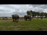 Слоны купаются в Иртыше. Омск (Омская область)