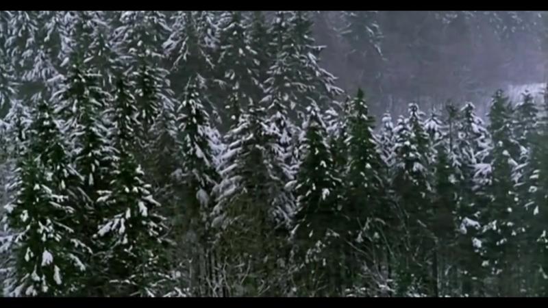 Until the light take us ( Fenriz walking in the forest. Bergen)