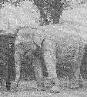 The lost elephant the lost elephant Lost