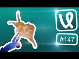 Лучшие ролики недели #147 Хватай и беги!