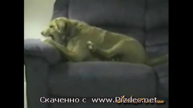 Пёс-шизофрен