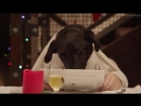 Freshpet_Holiday_Feast_13_Dogs_and_1_Cat_Eating_with_Human_Hands