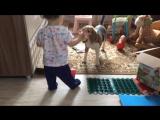 Чем занять ребёнка и бигля )))