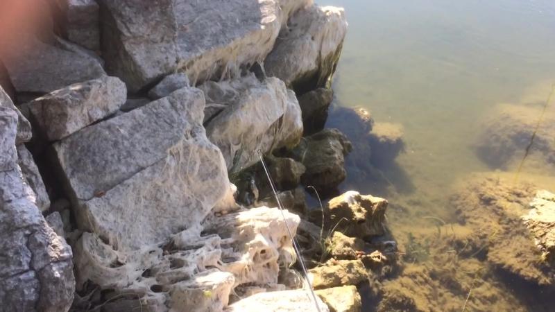 Водяная крыса атакует