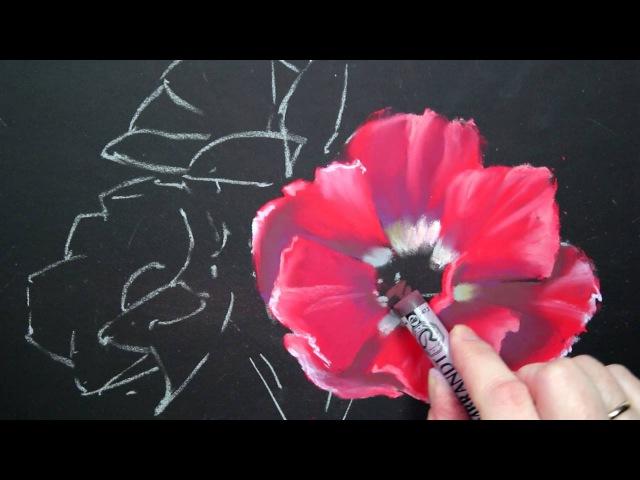 Рисуем анемоны пастелью