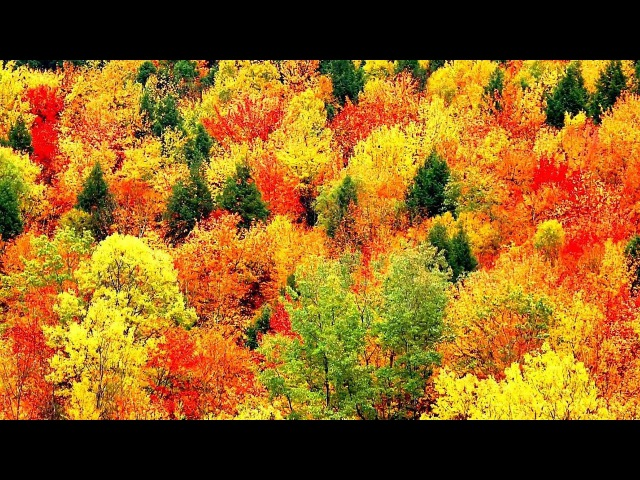Peaceful Music, Relaxing Music, Instrumental Music, Autumn Leaves by Tim Janis