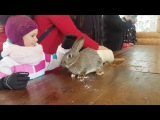 Аренда животных. Кролики в выездном контактном зоопарке в Доброграде . Владимирская обл. Город-курор