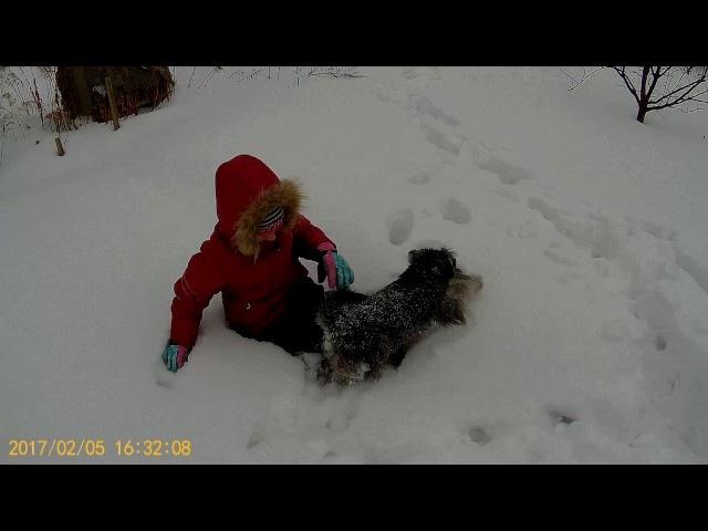 Цвергшнауцер Тайк и Полина. Плаваем в снегу!