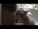 Кот говорит, открой мне!