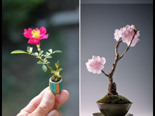 Bộ Sưu Tập 50 Chậu Hoa Mini Bonsai Cực Đẹp Này Sẽ Khiến Bạn Mê Mẩn Tâm Hồn