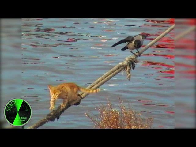 Кот и ворона Стамбул